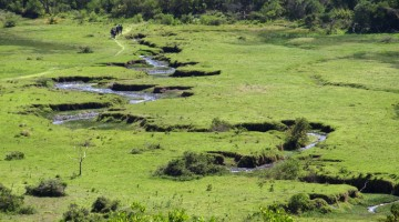 Arusha National Park. By Udare Safari