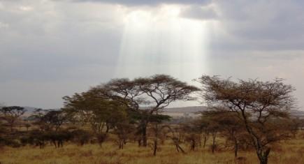 Serengeti National Park. By Udare Safari