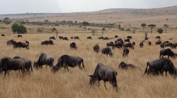 Masai Mara National Reserve. By Udare Safari