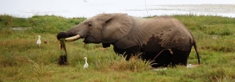 Kikuyu itinerary. By Udare Safari