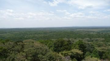 Kakamega Forest. Wikipedia