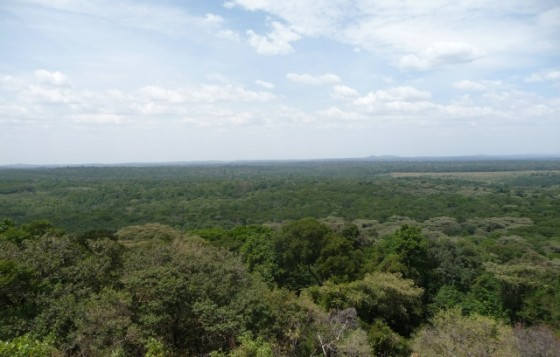 Kakamega Forest. Wikipedia