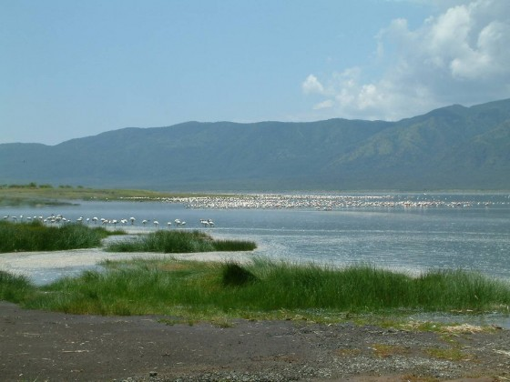 Lake Bogoria National Reserve. Wikipedia