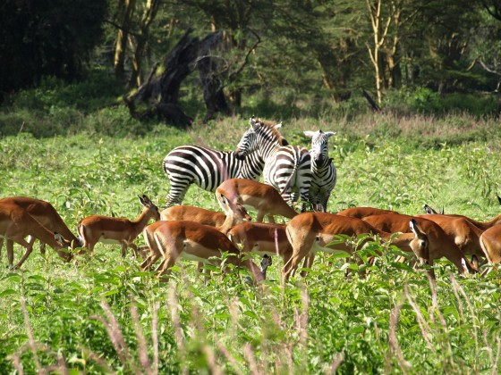 Lago Nakuru. Por Udare