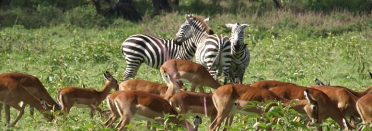 Borana itinerary. By Udare Safari