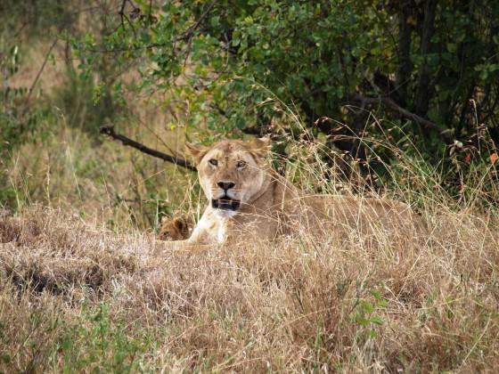 Kalenjin itinerary. By Udare Safari