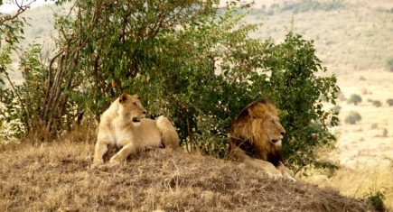 Kamba itinerary. By Udare Safari