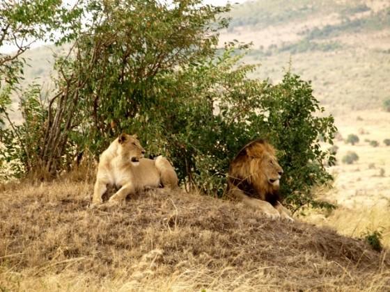 Kamba itinerary. By Udare Safari