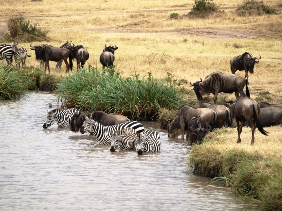 Chaga itinerary. By Udare Safari