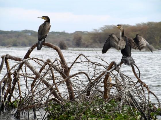 Lake Naivasha. By Udare Safari