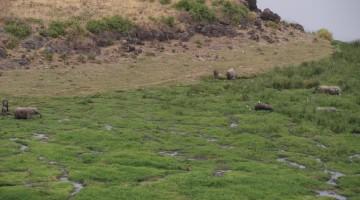 Amboseli National Park. By Udare Safari