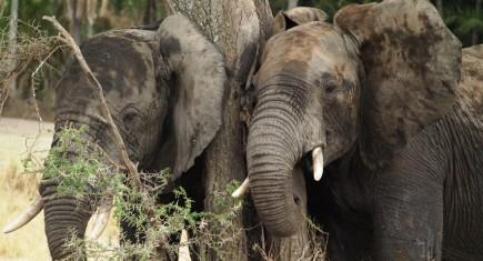 Datoga itinerary. By Udare Safari