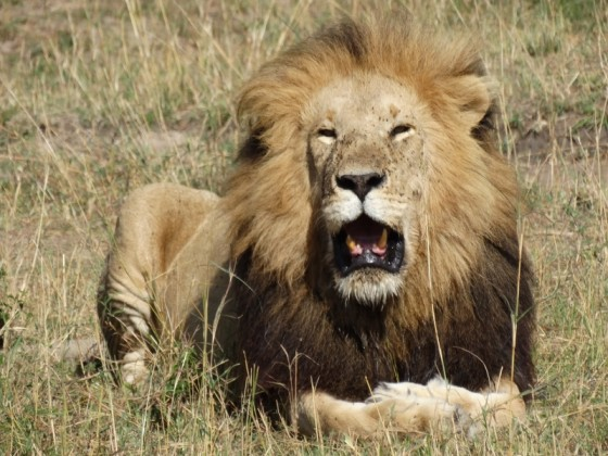 Haya itinerary. By Udare Safari