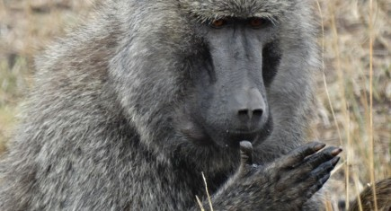 Gogo itinerary. By Udare Safari